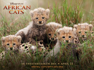 african_cats02